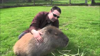 Making Friends with a Capybara