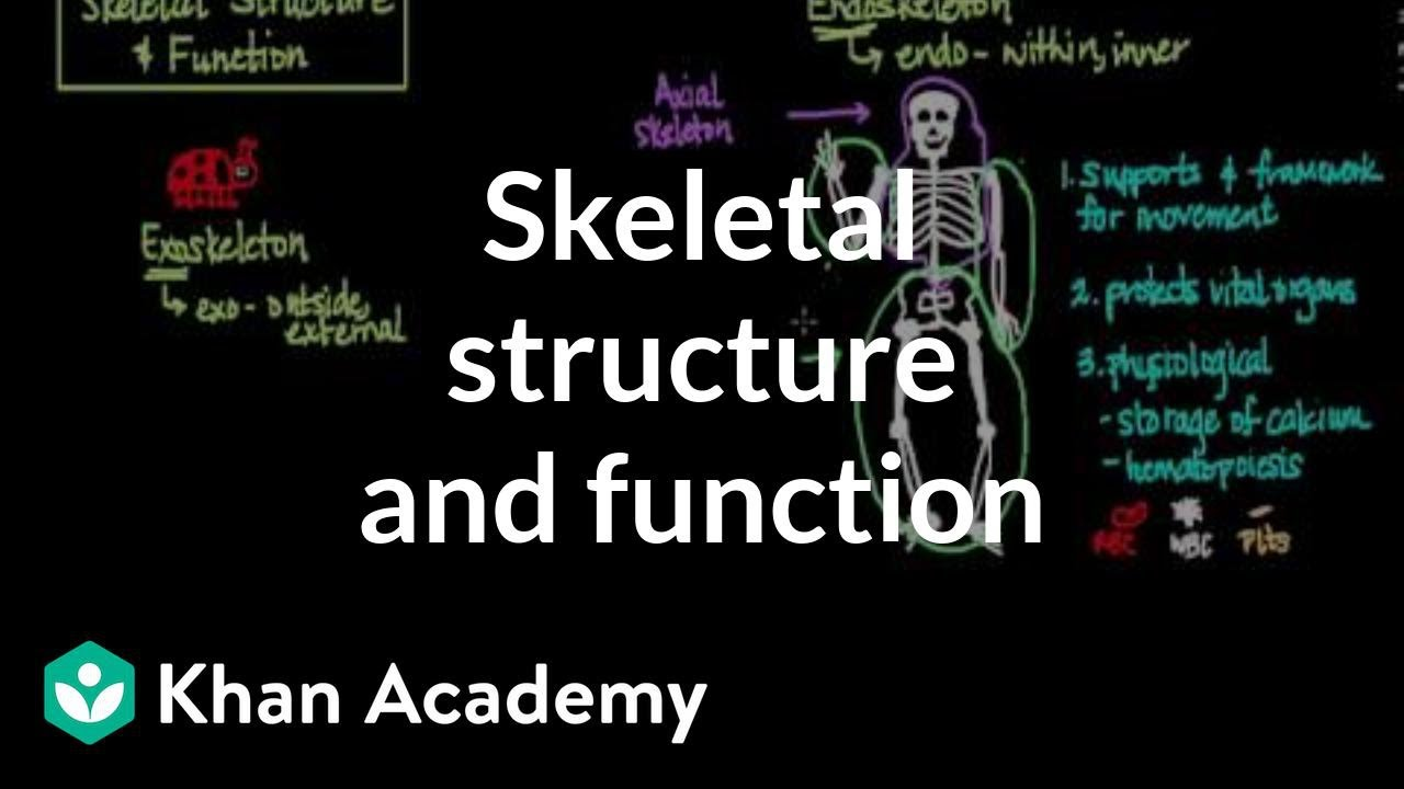 Skeletal Structure And Function Video Khan Academy