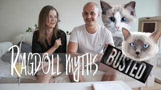 Owning a Ragdoll cat MYTHBUSTING! Myths about Ragdolls | Ragdolls Pixie and Bluebell