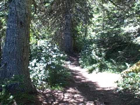 Lake Angeles Trail Run, Olympic National Park, Pt Angeles WA