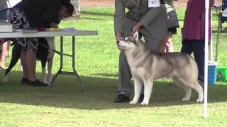 10/28/12 Working Dog Club Of Hawaii - Group.m4v