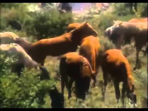Opowieść skrzydlatego wiatru - 1981 - [Western][Przygodowy] [Lektor]