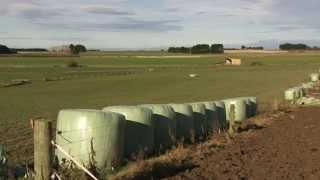 Eastbourne Dairy Farm Investment with Roger Dickie New Zealand