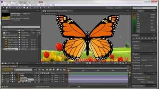 Animating a Butterfly using After Effects