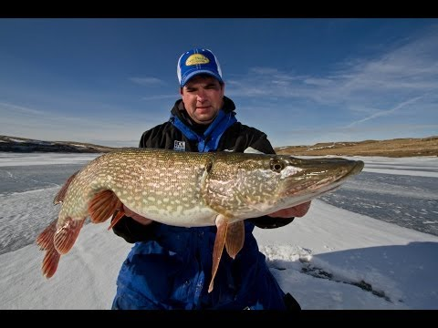 Trophy Ice Fishing Opportunities on Fort Peck