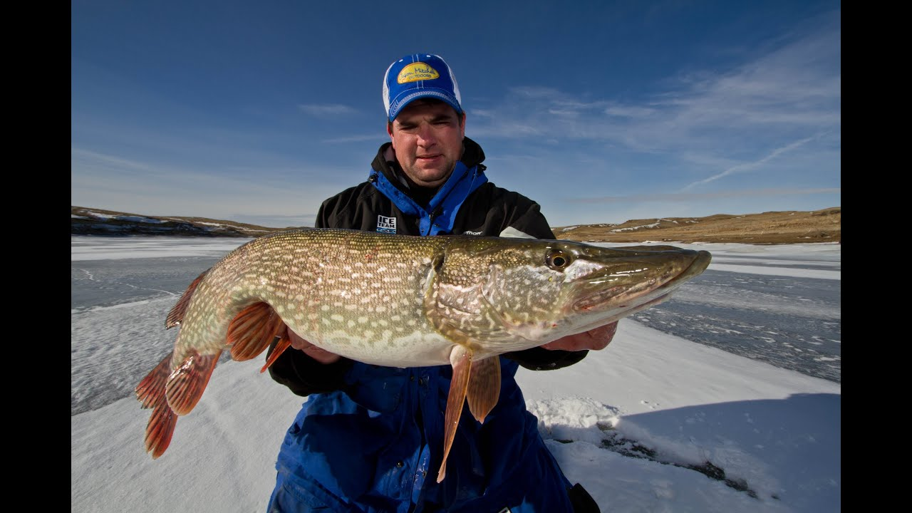 Trophy ice fishing opportunities on fort peck youtube for Fort peck fishing report