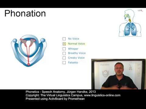 PHO103 - Speech Anatomy