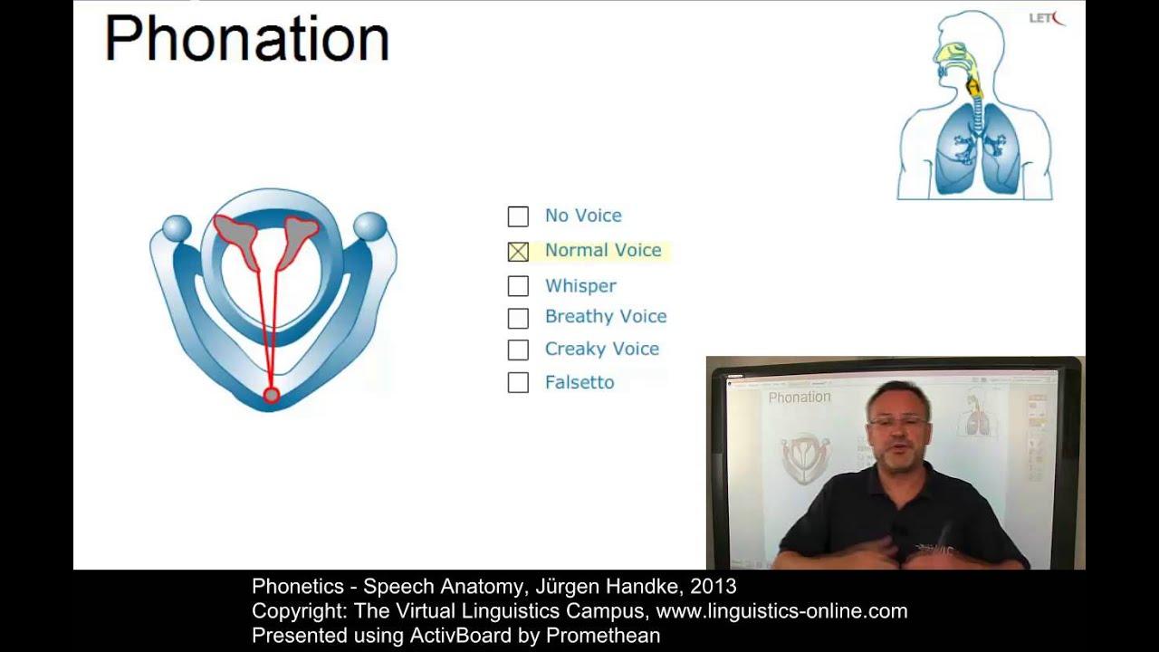 PHO103 - Speech Anatomy - YouTube