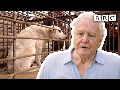 David Attenborough's warning: are humans responsible for pandemics? | Extinction: The Facts - BBC