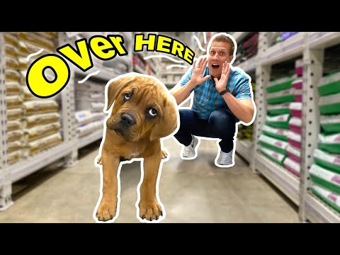 Buying Blind Homeless Puppy EVERYTHING He Touches! ( Kobe now fostered At Home With Me )