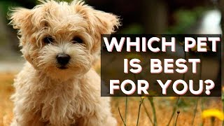 Which Pet Is Best For You? | Fun Tests