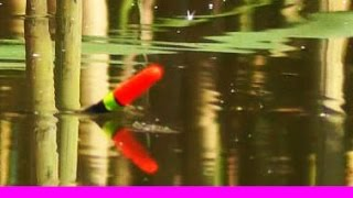 6-Поклевка КАРАСЯ на поплавочную удочку .Рыбалка. Ловля карася. Насадка- опарыш. Ловля на поплавок(Май. Хронология одной поклевки.... Вдали от суеты, места непуганых карасиков и кукушек :).….((Мой канал- это..., 2013-05-27T09:16:48.000Z)