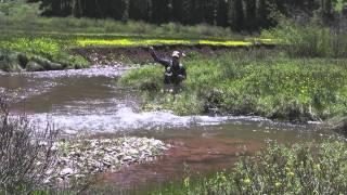 Episode 3: Colorado River Cutthroat Trout in Southwest Colorado