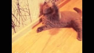 Кот нашел хозяина :)
