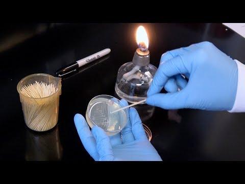 Streaking For Single Colonies Lab Tip #1: Best Practices