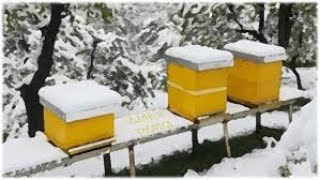 Tokom zime - Na koji način klube greje pčele i kako se kreće ka medu?