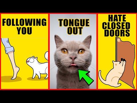 8 Odd Cat Behaviors Explained