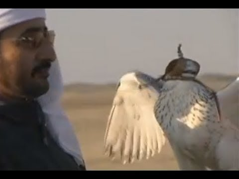 Dubai Falconry - Falcon Training - Sheikh Buti Bin Maktoum - Dubai UAE (part two)