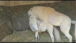 VLOG | Horses having sex!
