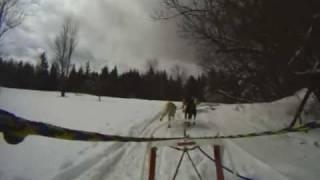 Speedy Sled Dog Training Run!