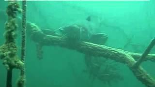 Wielki Sum nagrany podwodną kamerą.