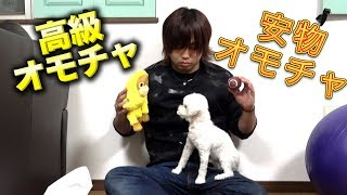 【癒し】犬は高いオモチャと安いオモチャどちらを選ぶのか thumbnail