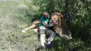 Сумасшедшее фото с львом -вожаком !!!
