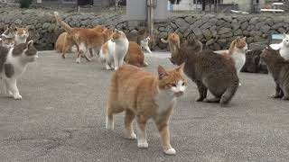 #1130 Cat Island Aoshima 2015 Dec 20 Part 1 Welcome of the cat thumbnail