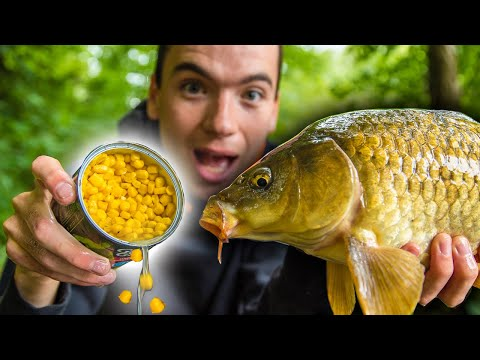 How To Catch Carp With Corn! (Easy And Cheap Bait For Carp Fishing)