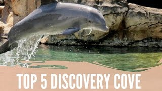 Top 5 Reasons to Visit Discovery Cove in Orlando Florida