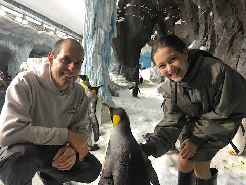 I MET THE PENGUINS AT SEA WORLD ORLANDO!! - Julia Silva