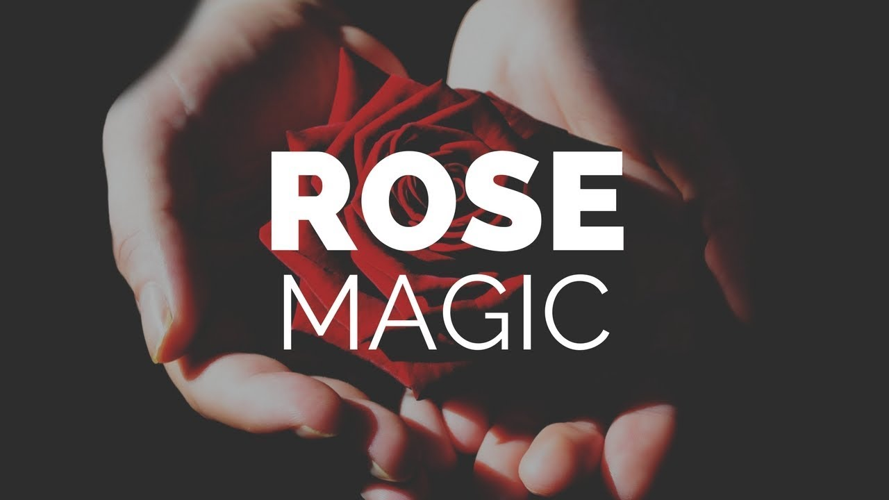 The Queen of Flowers: Rose Magical Properties and Uses