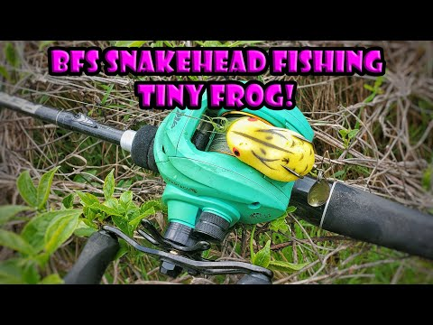 BFS Snakehead Fishing With Tiny Frog - KastKing Perigee II And Spartacus