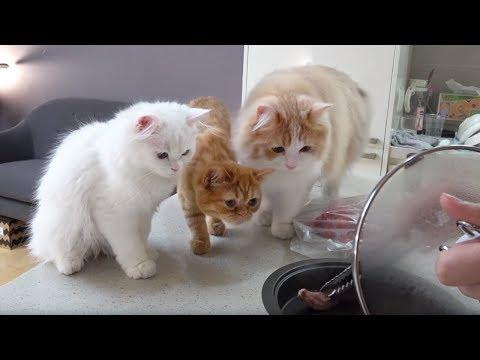 고양이와 함께 고기 굽는 날, 요리 먹방 [크림미식회]