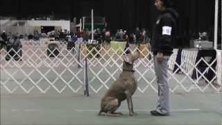 Lorenzo's Dog Training Team - Obedience - Akron, Ohio