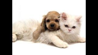 Funny - Maximum interesting dog, cat, animal's happening, failure image collection - Reverse video