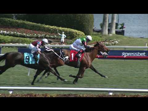 Gulfstream Park Replay Show | January 28, 2017
