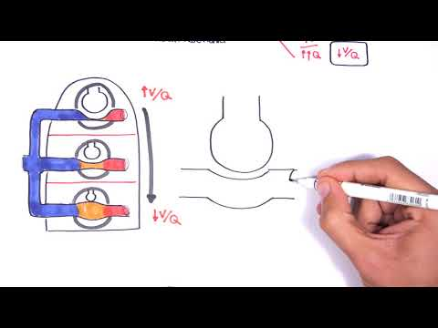 Respiratory System Physiology - Ventilation And Perfusion (V:Q Ratio) Physiology