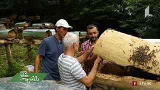 #ფერმა უნიკალური ჯარა და ველური თაფლი მაღალმთიან აჭარაში -  მე-10 საეთერო სეზონზე