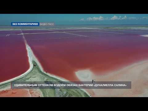 НТС Севастополь: Розовое озеро Сасык-Сиваш в Крыму