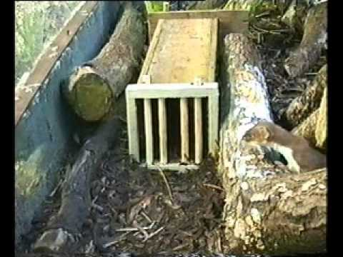 Gwct Tunnel Trap Excluder In Action