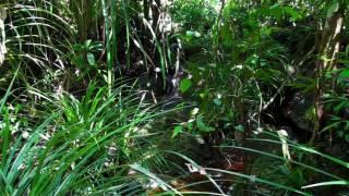 Matkalla Borneon sydämessä, osa 1