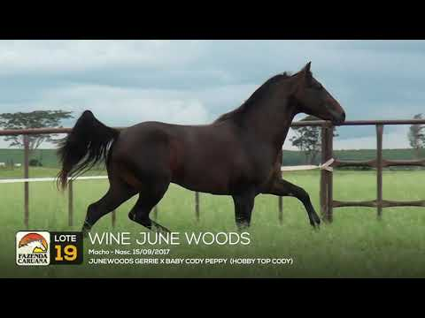 LOTE 19 - WINE JUNE WOODS