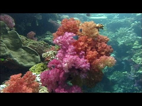 Indonesia Underwater HD