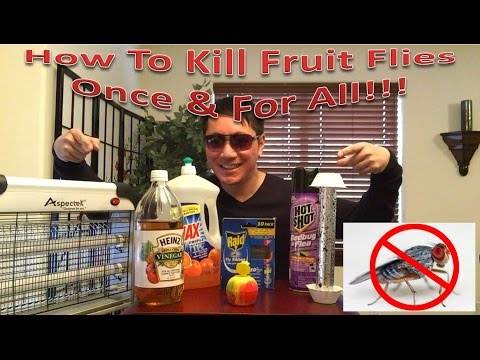How To Kill Fruit Flies Once & For All!!!