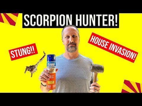 Bark Scorpion Sting! Getting Rid of Arizona Scorpions | Moving / Living In Phoenix AZ
