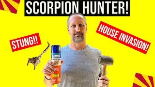 Stung By a Bark Scorpion! Getting Rid of Scorpions (DIY) | Living In Phoenix Ari