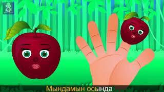 Алма отбасы | Семья пальчиков - яблок на Казахском | Apple Finger Family in Kazakh