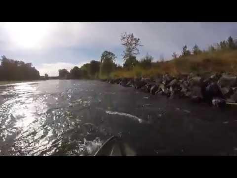 GoPro Kayaking the Willamette river, Whitley landing to marshall Island