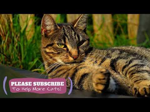 Sleeping Music for Kittens! 2 Hours of Feline ASMR Cat Sleep Music ☯LCZ116